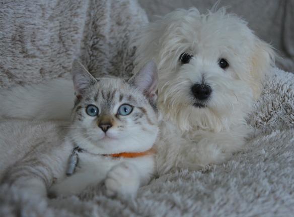 PetFriendlyRental-Cat&Dog